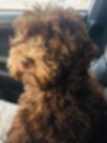 Josie (chloes pup).JPG