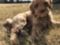 Nutmeg Chloes pup.jpg
