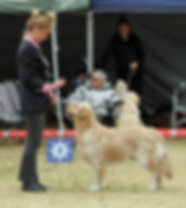 Savannalands Golden Retrievers, breeders of quality Golden Retrievers, Plettenberg Bay, Garden Route, Western Cape.