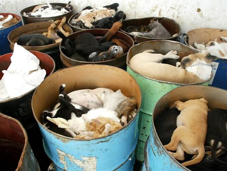 Animal Euthanasia For No Reason Is Cruel!