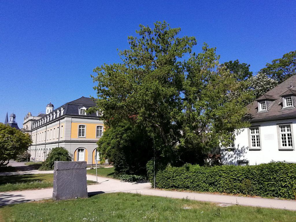 Heine Memorial and University