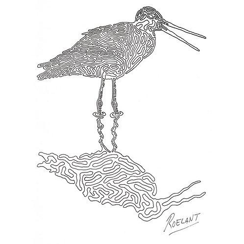 De Grutto (Nationale Vogel)
