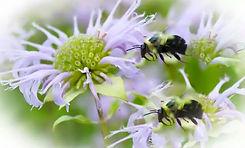 Bees 7.23.15.jpg