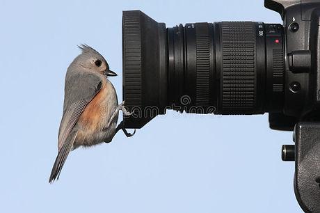 bird-camera-5211226.jpg
