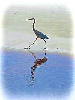 Bird on Shore, Florida
