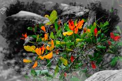 Flowers on Fallen Logs, Florida