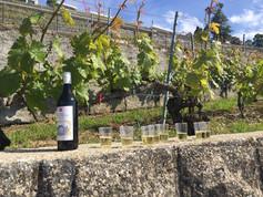 Lavaux - Weinprobe unterwegs