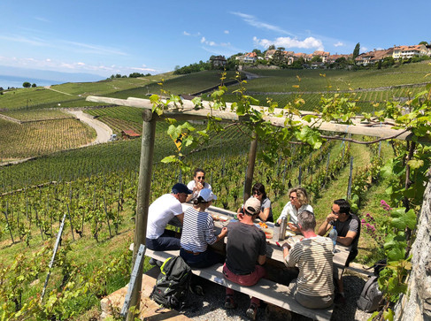 Lavaux - Picknick im Herzen der Rebparzellen