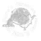 logo_redondo_pacos_sin_fon_blanc.png