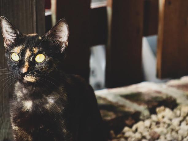 cat 030