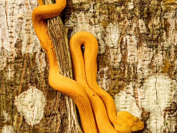 snake 031