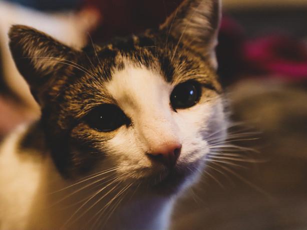 Cat 021