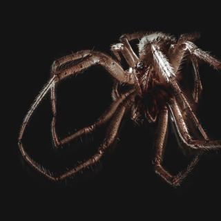 Spider-staking