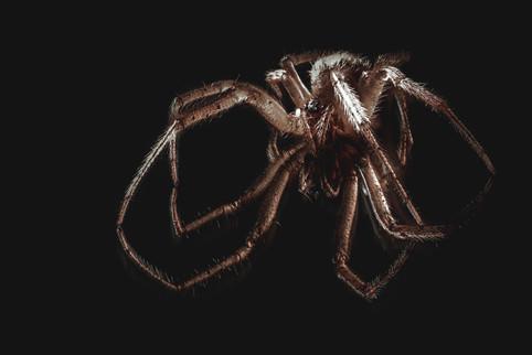 Spiderfinish.jpg