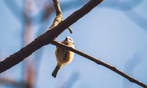 Vogel auf Ast.jpg