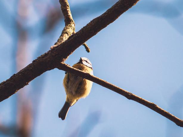 bird 014
