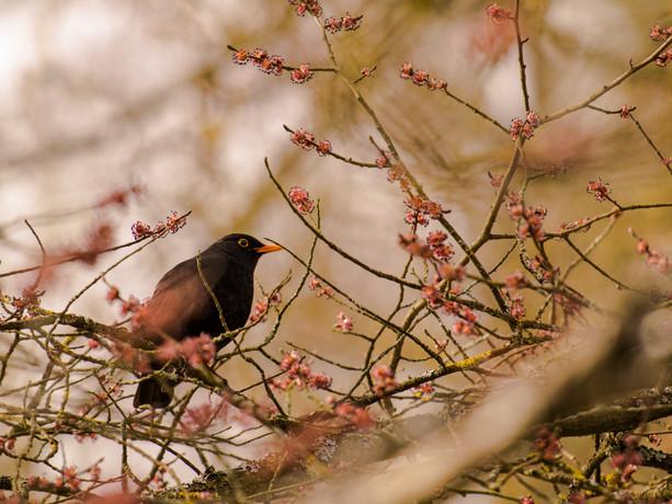 bird 015