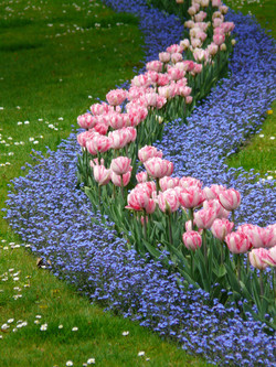flower beds liverpool