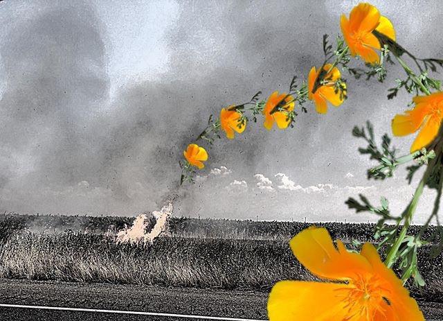 California State Flower Season. May 2019