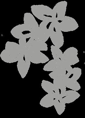 BlumenTropisch6x Grau.png