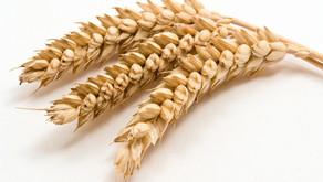 sensitive to gluten? check your skincare label