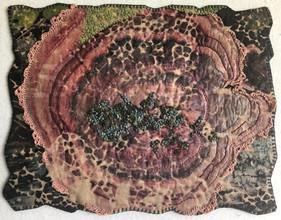 Costa Rica Funghi