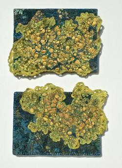 Lichen 1 and 2