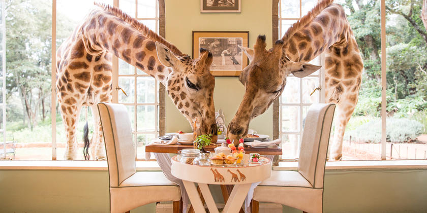 brekfast_with_the_giraffes.jpg