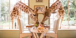 brekfast_with_the_giraffes.jpg