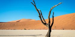 Kulala-Namib_2014-12-171e