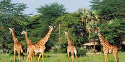 chem_chem_lodge_-_giraffe_in_front_of_te