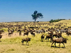 Serengeti migration_edited.jpg