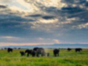 Eles Serengeti.jpeg