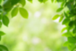 close-up-beautiful-natural-view-green-le