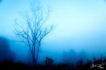 Misty morning in Clarens2.jpg