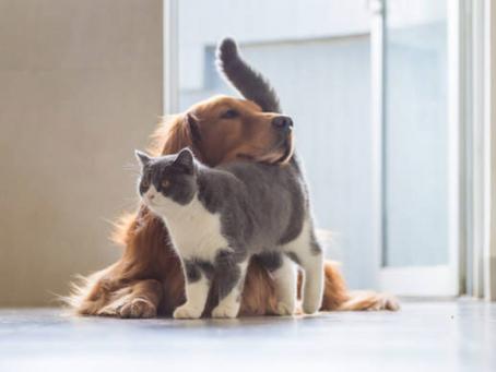 Can Mold Make Pets Sick?