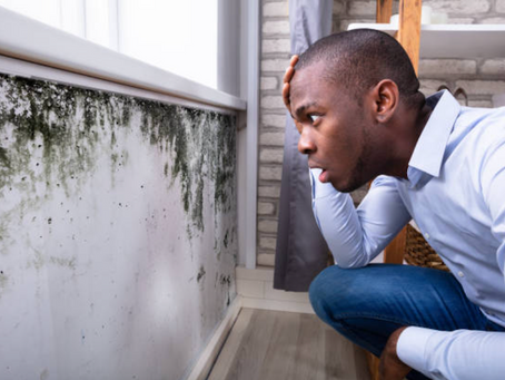 The Dangers of DIY Mold Remediation