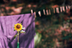 Flower Power Cloth Line