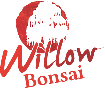 QUO0000604 - Willow Bonsai - Logo.png