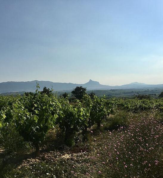 Importateu de Vins Ibériques en France