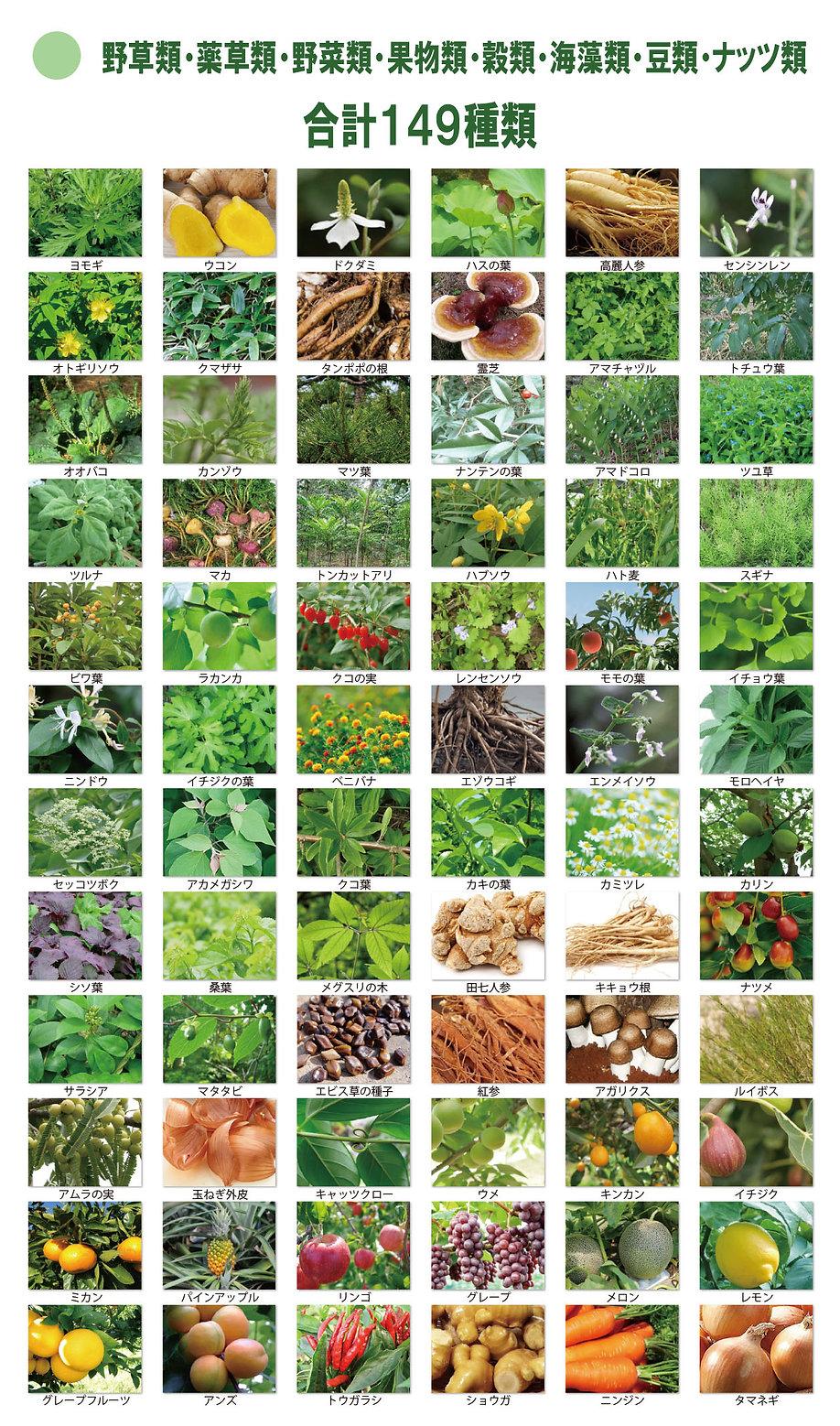 天然野草149-1.jpg