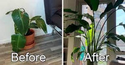 B4 & after plants pic 2.jpg