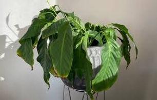 sick plant pic 2.jpg