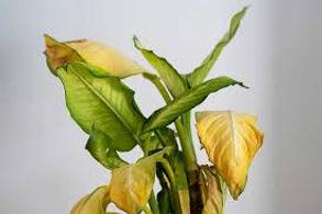 sick plant 1.jpg