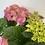 Thumbnail: Hydrangea In Galvanised Pot