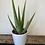 Thumbnail: Aleo Vera Plant