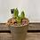 Thumbnail: White Hyacinth