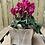 Thumbnail: Small Fuschia Cyclamen in Hessian Bag