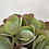 Thumbnail: Paddle Plant