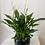 Thumbnail: Peace Lily in Black Pot